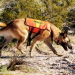 Thumbnail for Search and Rescue Dogs