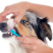 Thumbnail for February is Pet Dental Health Month